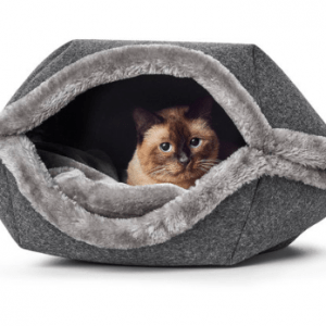 Hunter Lungano cat cave