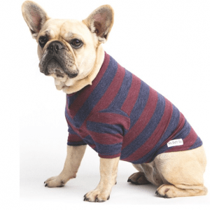 Mr Soft Top Merino wool tee for dogs