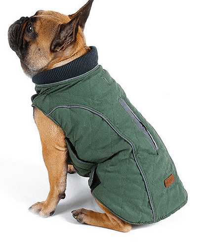 Quilted dog coat were warmth and comfort