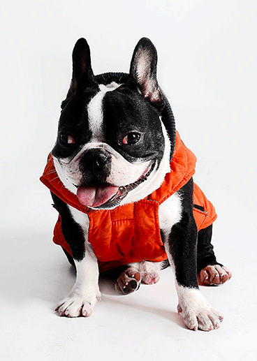 Quilted dog coat with harness hole