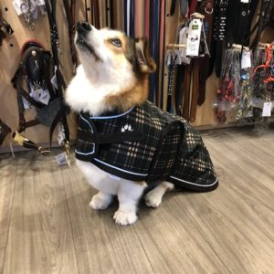 Shedrowk9 Glacier brown plaid dog coat