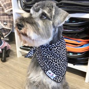 Mr Soft Top dog bandana