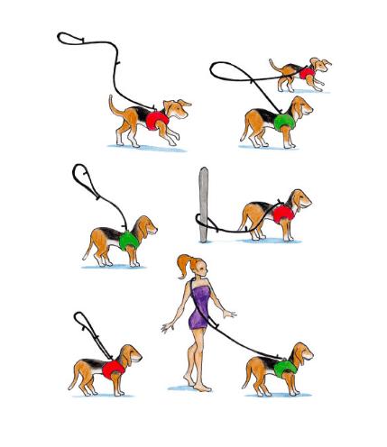Curli adjustable leash. Triple adjustable, comfortable and flexibal.