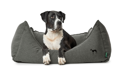 Hunter Livingston dog sofa bed