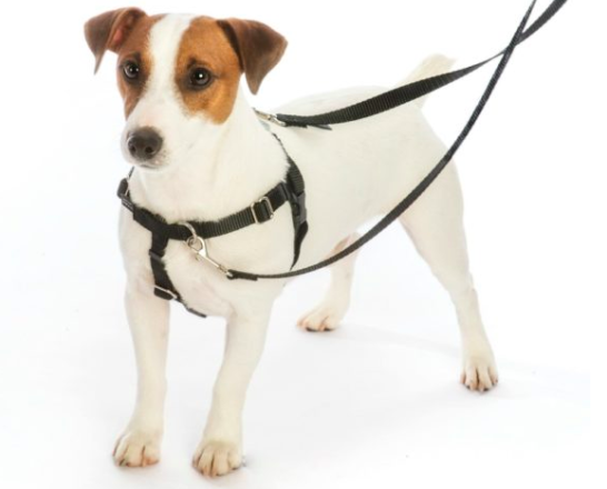 2 Hounds Freedom No-Pull Harness