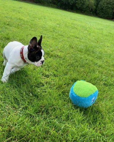 Cycle Dog Fuzzies Fuzzball dog toy