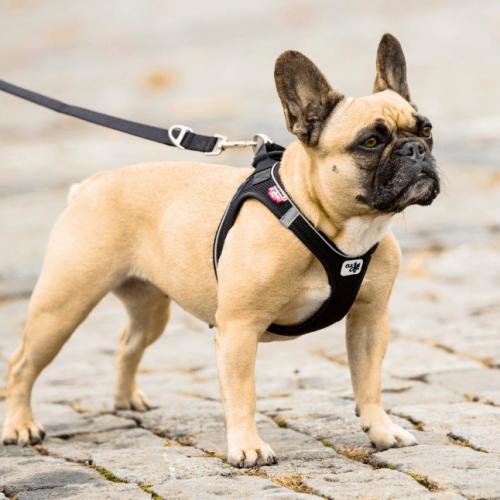 Curli comfort step in dog Harness black